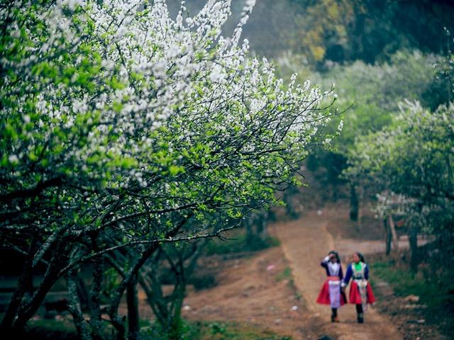 Khám phá Mộc Châu mùa hoa cải - Săn mây Tà Xùa  - 7