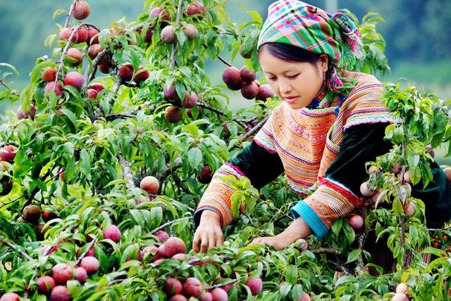 Khám phá Mộc Châu mùa hoa cải - Săn mây Tà Xùa  - 12