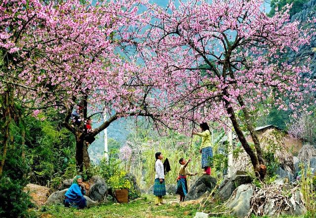 Khám phá Mộc Châu mùa hoa cải - Săn mây Tà Xùa  - 5