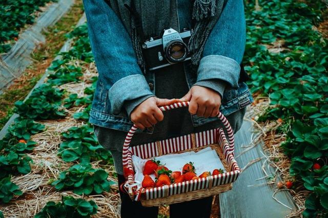 Khám phá Mộc Châu mùa hoa cải - Săn mây Tà Xùa  - 8