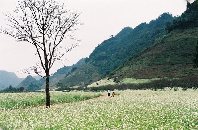 Khám phá Cao Nguyên Mộc Châu - Happy Land 2N1D - 3