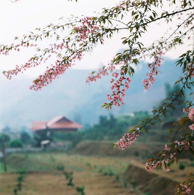 Khám phá Cao Nguyên Mộc Châu - Happy Land 2N1D - 11