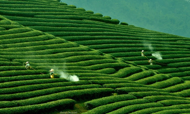 Khám phá Mộc Châu mùa hoa cải - Săn mây Tà Xùa - 1