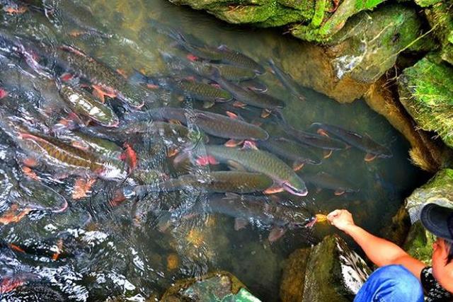 Tour Mai Châu - Pù Luông - Suối Cá thần 2N1Đ - 1