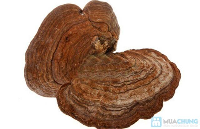 Nấm linh chi rừng Đà Lạt tốt cho sức khỏe  - Chỉ 299.000đ/01 kg - 2