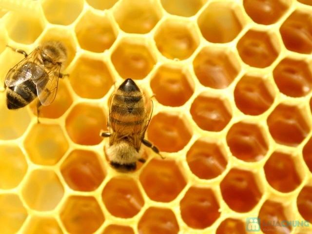 365 Viên Sữa ong chúa Royal Jelly Costar 1450mg chính hãng nhập khẩu từ Úc  - 2