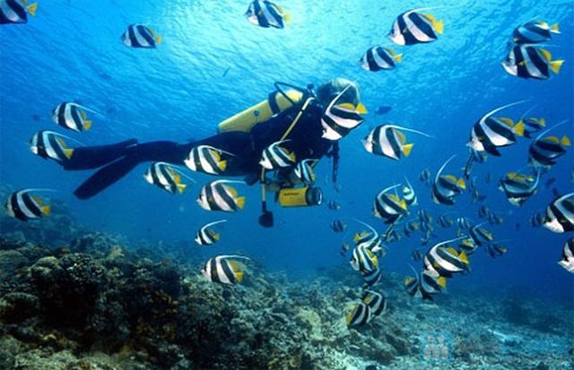 Tour du ngoạn 4 đảo kết hợp lặn biển tại Nha Trang kèm bữa trưa trên tàu - 8
