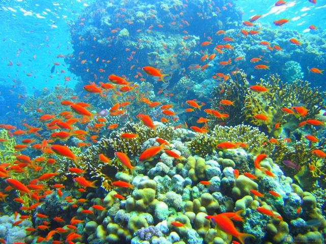 Tour du ngoạn 4 đảo kết hợp lặn biển tại Nha Trang kèm bữa trưa trên tàu - 22