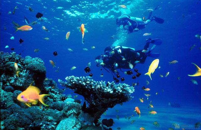 Tour du ngoạn 4 đảo kết hợp lặn biển tại Nha Trang kèm bữa trưa trên tàu - 5