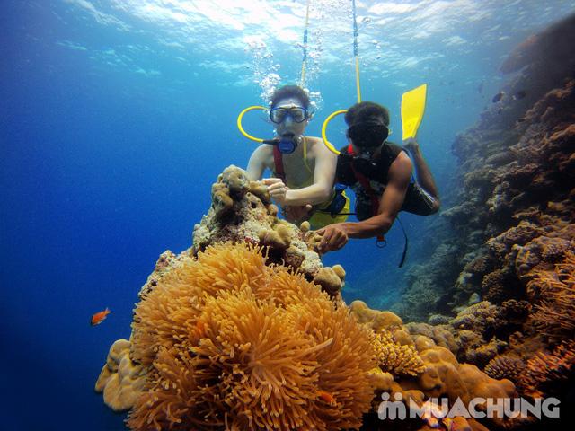 Tour du ngoạn 4 đảo kết hợp lặn biển Nha Trang - 18