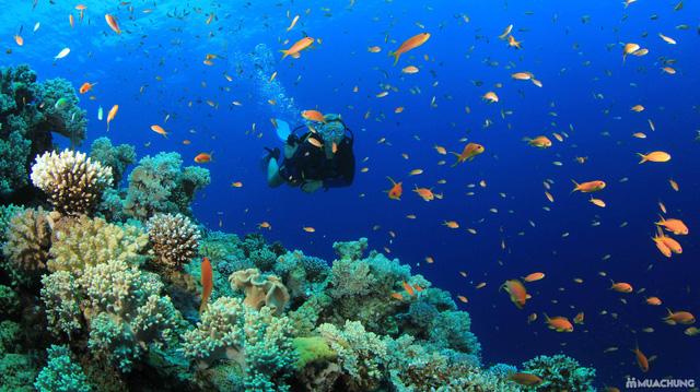 Tour du ngoạn 4 đảo kết hợp lặn biển Nha Trang - 17