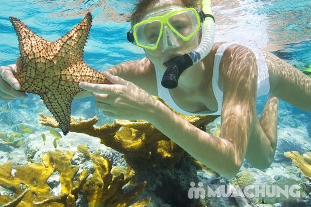 Tour Phú Quốc 1 ngày - Lặn biển ngắm san hô, câu cá ... - 17